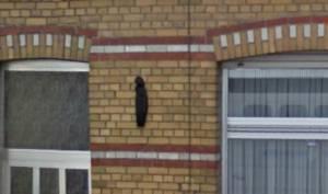 DeWittestraat74